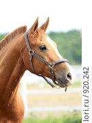 Купить «Портрет коня», фото № 920242, снято 14 июня 2009 г. (c) Яна Королёва / Фотобанк Лори