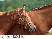Купить «Конь крупным планом», фото № 920298, снято 14 июня 2009 г. (c) Яна Королёва / Фотобанк Лори