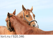 Купить «Лошади», фото № 920346, снято 14 июня 2009 г. (c) Яна Королёва / Фотобанк Лори