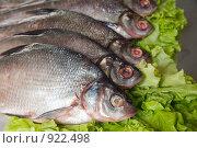 Купить «Свежая рыба», фото № 922498, снято 7 июня 2009 г. (c) Яков Филимонов / Фотобанк Лори