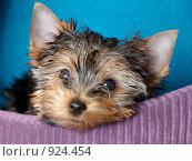 Купить «Устал», фото № 924454, снято 28 февраля 2009 г. (c) Тимофеев Павел / Фотобанк Лори