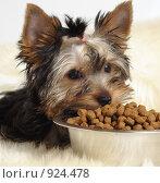 Купить «Обед», фото № 924478, снято 29 марта 2009 г. (c) Тимофеев Павел / Фотобанк Лори