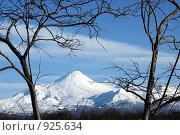 Купить «Вулкан в рамке из деревьев», фото № 925634, снято 12 ноября 2008 г. (c) Анатолий Никитин / Фотобанк Лори