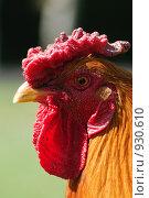 Купить «Петух», фото № 930610, снято 1 мая 2008 г. (c) Синицын Игорь / Фотобанк Лори