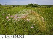 Ковыль (Stipa spp.) на остепненном лугу. Стоковое фото, фотограф Иван Сазыкин / Фотобанк Лори