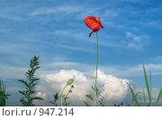 Мак в облаках. Стоковое фото, фотограф Альберт Черных / Фотобанк Лори