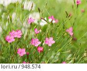 Купить «Цветы», фото № 948574, снято 28 июня 2009 г. (c) Юрий Бельмесов / Фотобанк Лори