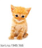 Купить «Маленький рыжий котенок на белом фоне», фото № 949166, снято 18 июня 2009 г. (c) Анна Игонина / Фотобанк Лори