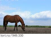 Купить «Лошадь», фото № 949330, снято 29 июня 2009 г. (c) Яна Королёва / Фотобанк Лори