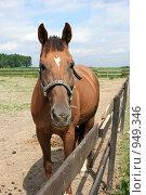 Купить «Лошадь», фото № 949346, снято 29 июня 2009 г. (c) Яна Королёва / Фотобанк Лори