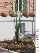 Купить «Уличные цветы в подвесном кашпо с клумбой», фото № 949486, снято 28 июня 2009 г. (c) Сергей Плюснин / Фотобанк Лори