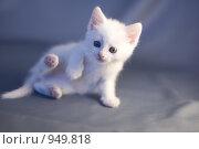 Белый котенок удивлен. Стоковое фото, фотограф Алексей Росляков / Фотобанк Лори