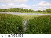 Купить «Лесное озеро», эксклюзивное фото № 955858, снято 29 июня 2009 г. (c) Наталья Волкова / Фотобанк Лори
