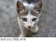 Кот. Стоковое фото, фотограф Анастасия Кутейникова / Фотобанк Лори