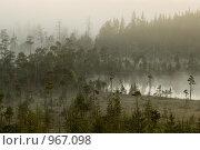 Туманное утро в лесу. Стоковое фото, фотограф Кекяляйнен Андрей / Фотобанк Лори