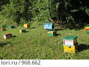 Купить «Пасека», фото № 968662, снято 20 июня 2009 г. (c) Игорь Долгов / Фотобанк Лори