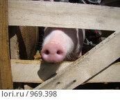 Купить «Детки в клетке», фото № 969398, снято 28 июня 2009 г. (c) Александра Стрижева / Фотобанк Лори