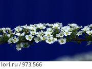 Венок невесты. Стоковое фото, фотограф Ирина Величинская / Фотобанк Лори