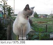 Кошка  зевает. Стоковое фото, фотограф Андрей Бабкин / Фотобанк Лори