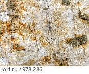 Купить «Текстура кварц молочно-белый покрытый сетью мелких трещин», фото № 978286, снято 4 июля 2009 г. (c) Александр Лукьянов / Фотобанк Лори