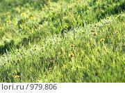 Зеленый луг. Стоковое фото, фотограф Анна Фролова / Фотобанк Лори