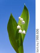 Купить «Ландыш», фото № 988606, снято 5 мая 2009 г. (c) Юрий Брыкайло / Фотобанк Лори