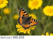 Бабочка на цветке. Стоковое фото, фотограф Виктор Косьянчук / Фотобанк Лори