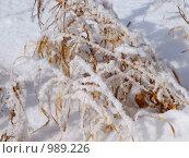 Купить «Мартовский снег», фото № 989226, снято 7 марта 2009 г. (c) Татьяна Адаменко / Фотобанк Лори