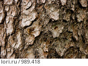 Купить «Кора дерева», фото № 989418, снято 21 июня 2009 г. (c) Татьяна Гришина / Фотобанк Лори