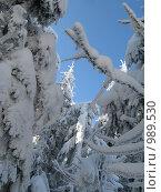 Зимний лес. Стоковое фото, фотограф Плоходько Денис / Фотобанк Лори