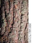 Купить «Сосновая кора», фото № 991602, снято 3 мая 2009 г. (c) Анастасия Некрасова / Фотобанк Лори