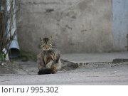 Купить «Мартовский кот», фото № 995302, снято 1 апреля 2007 г. (c) Smolin Ruslan / Фотобанк Лори