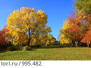 Купить «В осеннем парке», фото № 995482, снято 2 октября 2008 г. (c) Михаил Коханчиков / Фотобанк Лори