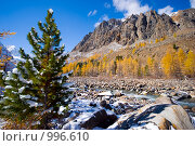 Купить «Молодой сибирский кедр у горной реки», фото № 996610, снято 25 сентября 2007 г. (c) Андрей Тепляков / Фотобанк Лори