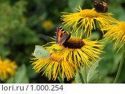 Июльские цветы с бабочками. Стоковое фото, фотограф Елена Колтыгина / Фотобанк Лори
