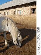 Купить «Конь в загоне», фото № 1003858, снято 28 июля 2009 г. (c) Елена Азарнова / Фотобанк Лори