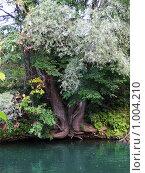 Купить «Берег реки», фото № 1004210, снято 26 июля 2009 г. (c) Neta / Фотобанк Лори