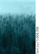 Туманный таинственный лес. Стоковое фото, фотограф Кекяляйнен Андрей / Фотобанк Лори