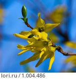 Купить «Весна», фото № 1004486, снято 29 апреля 2009 г. (c) Александр Артемьев / Фотобанк Лори