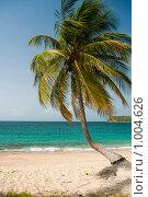 Купить «Кокосовая пальма на берегу», фото № 1004626, снято 24 июля 2009 г. (c) Ирина Кожемякина / Фотобанк Лори