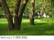Купить «В тишине городской», фото № 1005842, снято 29 июля 2009 г. (c) Stepanuk Valera / Фотобанк Лори