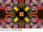 Купить «Узор из лепестков цветка», фото № 1010042, снято 6 июня 2009 г. (c) Parmenov Pavel / Фотобанк Лори