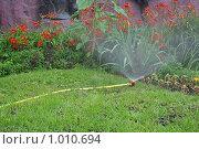 Купить «Полив», фото № 1010694, снято 30 июля 2009 г. (c) Ольга Шаран / Фотобанк Лори