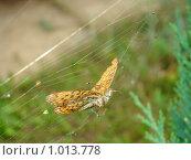 Бабочка в паутине. Стоковое фото, фотограф Виктор Бондарь / Фотобанк Лори