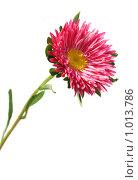 Купить «Цветок астры», фото № 1013786, снято 2 августа 2009 г. (c) Эдуард Жлобо / Фотобанк Лори
