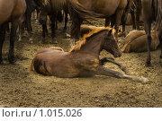 Купить «Жеребенок», фото № 1015026, снято 23 июля 2009 г. (c) Сергей Новиков / Фотобанк Лори