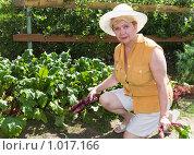 Купить «Дачница-пенсионерка с ранним урожаем свеклы», фото № 1017166, снято 26 июля 2009 г. (c) Николай Коржов / Фотобанк Лори