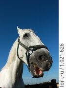 Купить «Портрет белого коня», фото № 1021626, снято 6 августа 2009 г. (c) Яна Королёва / Фотобанк Лори
