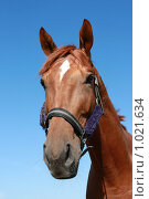 Купить «Портрет коня», фото № 1021634, снято 6 августа 2009 г. (c) Яна Королёва / Фотобанк Лори