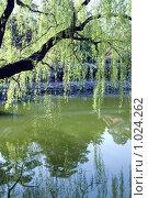 Купить «Ива над водой», фото № 1024262, снято 15 апреля 2009 г. (c) Estet / Фотобанк Лори
